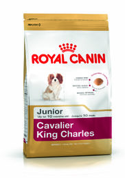 Cavalier King Charles Junior 1,5 kg