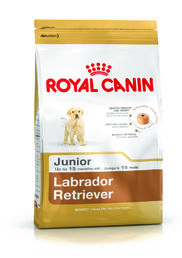 Labrador Retriever Junior 12 kg