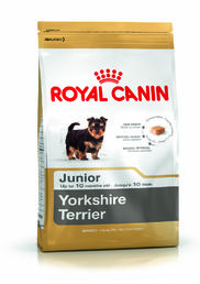 Yorkshire Terrier Junior 1,5 kg