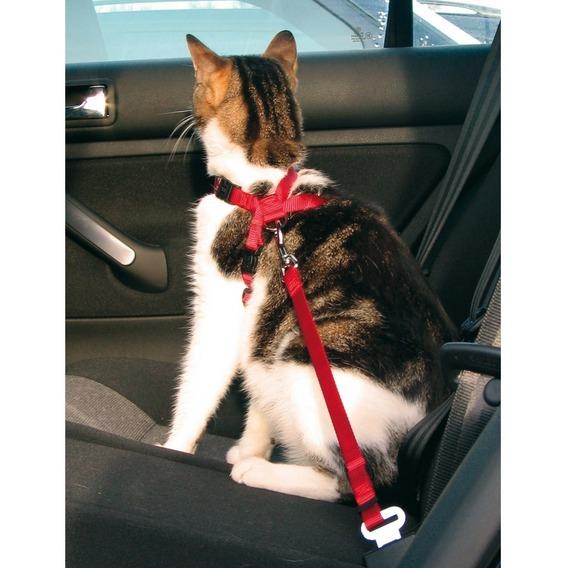 kissa autossa